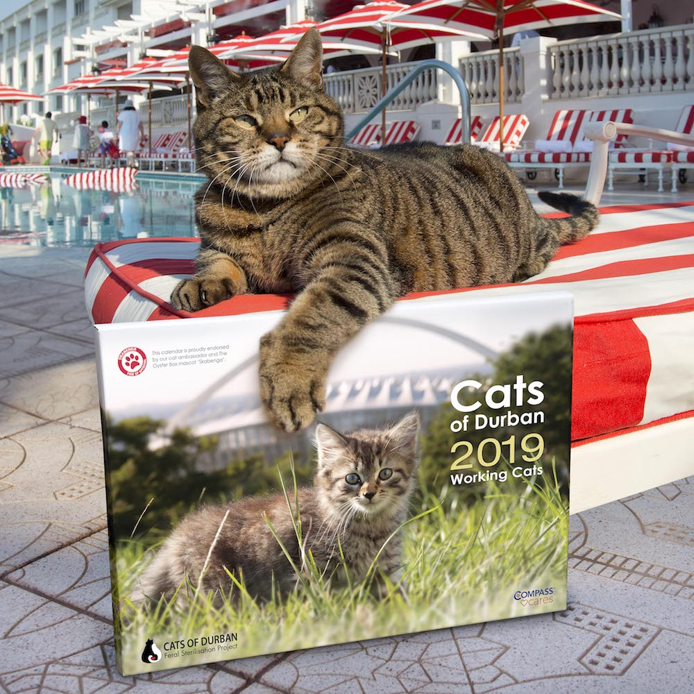 Skabenga launches charity calendar on National Feral Cat Day