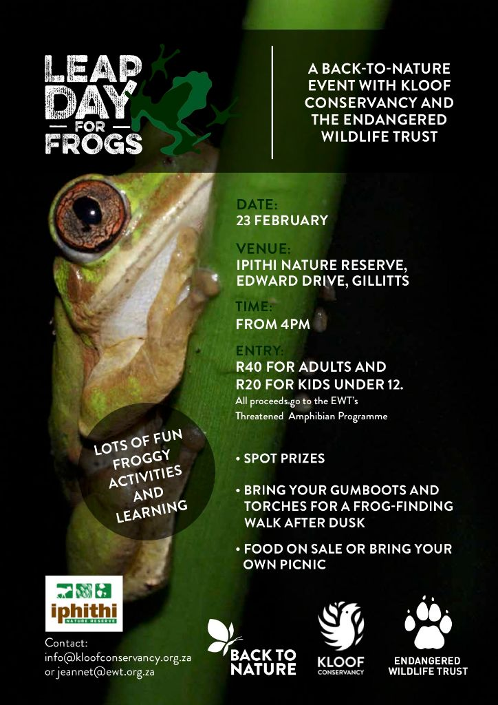 Leap Day for Frogs Poster