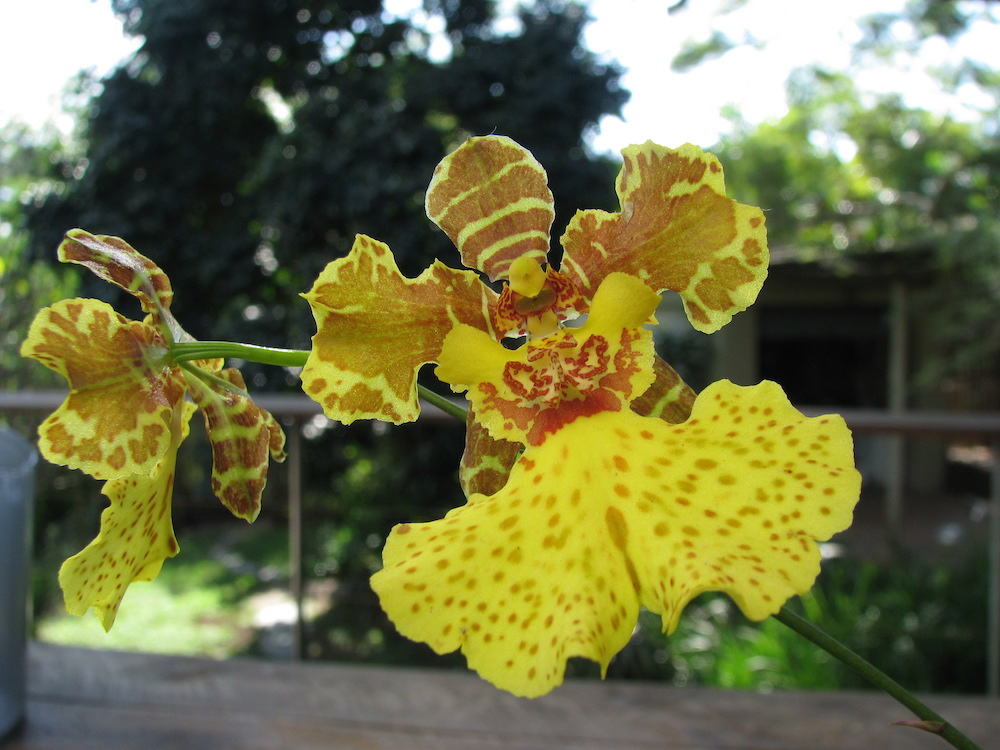 Orchid and Rare Plant Fair